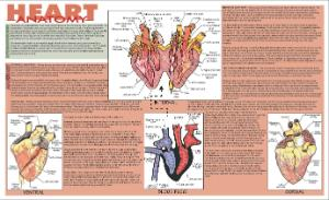 Heart Dissection Placemat