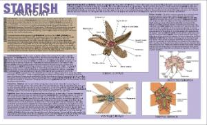 Starfish Dissection Placemat