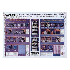 Ward's® Electrophoresis Techniques Reference Poster