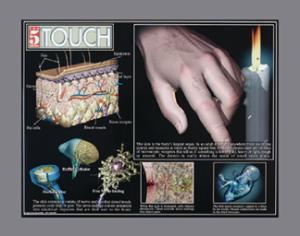 Five Senses Poster Set