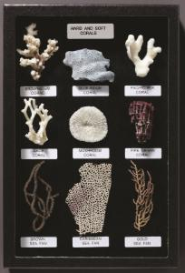 Hard and Soft Corals Riker Mount