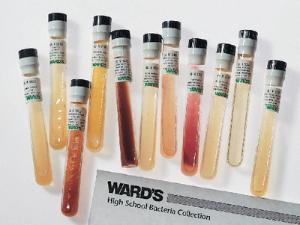 Ward's® High School Bacteria Culture Set