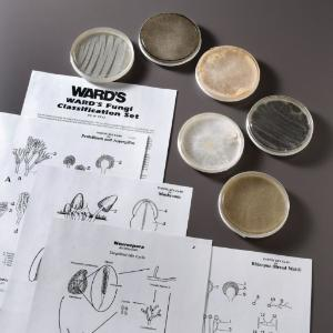 Ward's® Fungi Classification Set