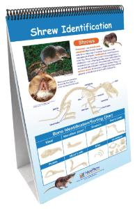 Curriculum Mastery® Science Flip Charts: Owls & Owl Pellet Set