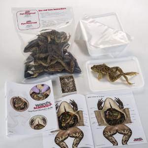 Ward's® Pure Preserved™ Grassfrog Dissection Kit