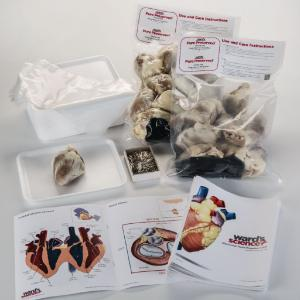 Ward's® Pure Preserved™ Sheep Heart Dissection Kit