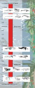Evolution of Whales Kit