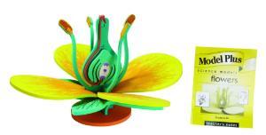 Model Plus: The Flower