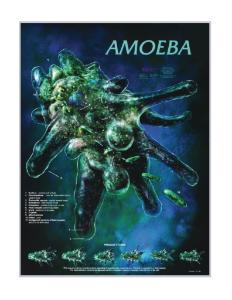 Biocam Protozoa Posters