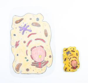 SHRINKLES® Plant and Animal Cells Activity Kit