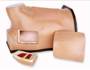 Chest tube/ultrasound guided thoracentesis model