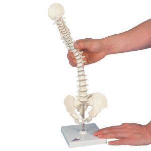 Mini anatomy set