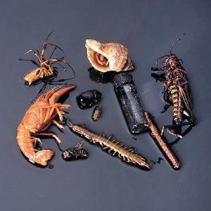 Ward's® Arthropod Collection