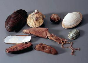 Ward's® Mollusc Collection