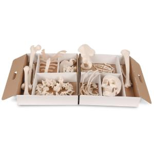 Disarticulated Half Skeleton-Wired