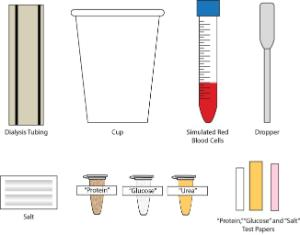 Science Take-Out® Kidney Dialysis