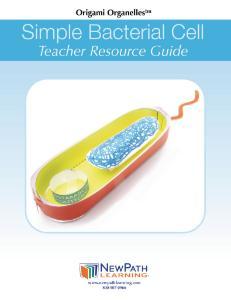 Model kit bacterial cell