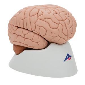 Model Brain, 8 Parts