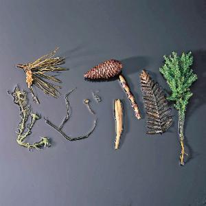 Ward's® Plant Kingdom Survey Set