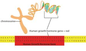 Science Take-Out® Genetic Engineering: Way To Grow