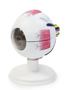 Walter® 6 Part Eye