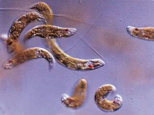 Division Of Life Aquatic Organisms