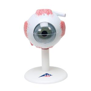 Model Eye 3× Size, 6-Parts
