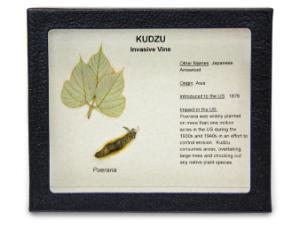 Invasive Species Survey Set, Kudzu