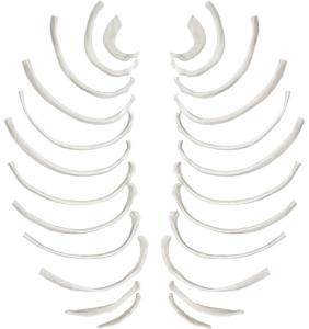 Eisco® Individual Bones, Axial