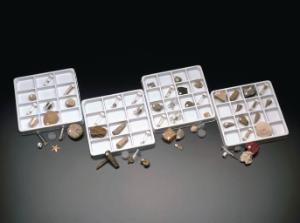 """Ward's® Complete """"In Search of Ancient Life"""" Series, Set of 12 Fossil Collections"""