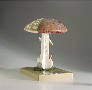 Somso® Mushroom Model