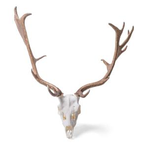 Red Deer Skull Male