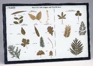Advanced Leaf Classification Riker Mount