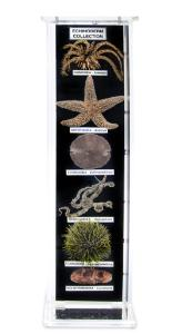 Echinoderm Collection, Museum Mount