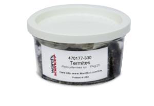 Live Termites, <i>Reticulitermes sp.</i>