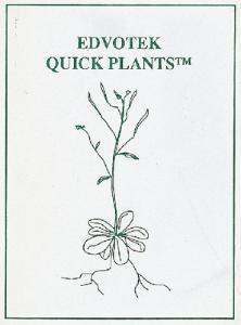Arabidopsis Thaliana Seeds