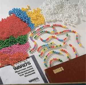 Ward's® Mapping and Sequencing the Human Genome Lab Activity