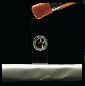 Ward's® Microaquarium Kit