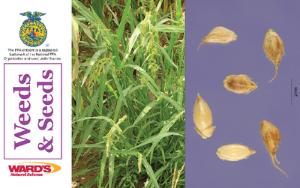 Ward's® Agricultural Science Flash Cards