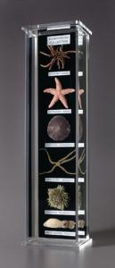 Echinoderm Collection Museum Mount