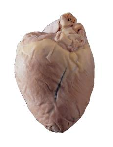 Preserved Pig Hearts