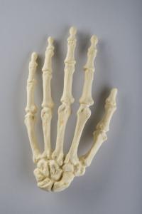 Standard Hand