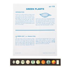Green Plants Microslide