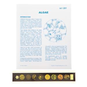 Algae Microslide