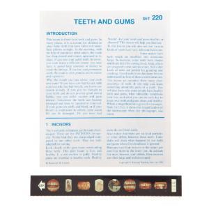 Teeth & Gums Microslide