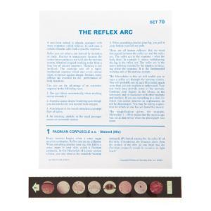 The Reflex Arc Microslide