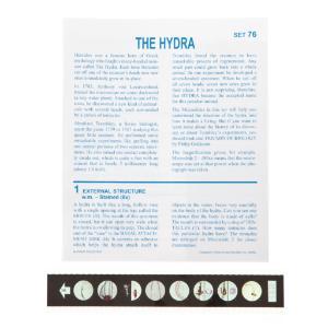 The Hydra Microslide
