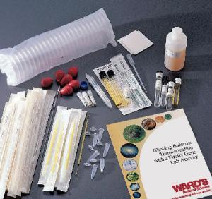 Firefly Gene Transformation Kit