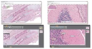 Ward's® Digital Slides: Advanced Histology Set