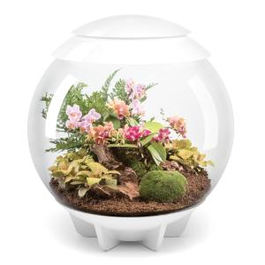 biOrb® Air Terrarium